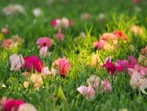 Vele kleine bloemen op een grond Stock Foto