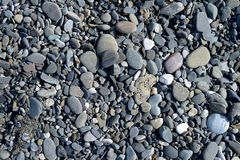 Vele kleine en middelgrote mariene sladkihstenen die de achtergrond vormen Royalty-vrije Stock Foto's