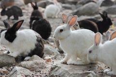 Vele kleine konijnen Stock Afbeeldingen
