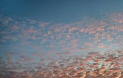 Vele kleine roze gele rode wolken in de donkerblauwe hemel Oktober-avond, zonsondergang stock foto