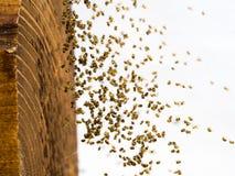 Vele kleine spiderlings Royalty-vrije Stock Afbeeldingen