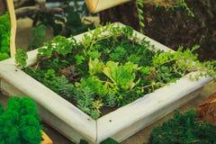 Vele kleine succulents Royalty-vrije Stock Foto's