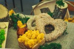 Vele kleine succulents Royalty-vrije Stock Foto