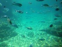 Vele kleine vissen Royalty-vrije Stock Foto's