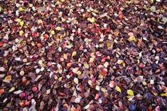 Vele kleuren van gevallen bladeren Royalty-vrije Stock Foto's