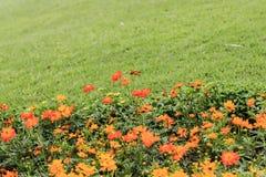 Vele kleurenbloemen in openbare tuin Stock Foto's