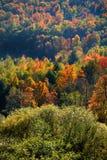 Vele Kleurrijke Bomen Royalty-vrije Stock Foto