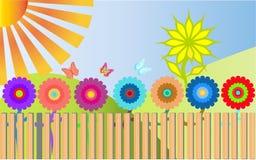 Vele kleurrijke, heldere, bont bloemen groeien achter houten Stock Afbeeldingen