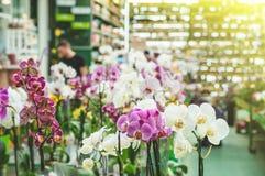 Vele kleurrijke orchidee?n in een pot in de opslag, sluiten omhoog stock afbeelding