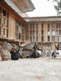 Vele konijnen op het landbouwbedrijf Stock Foto