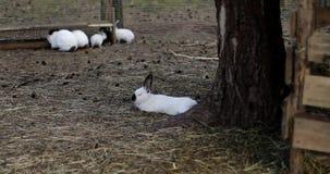Vele konijnen op het landbouwbedrijf stock videobeelden