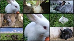 Vele konijnen op het landbouwbedrijf, het kweken konijnen stock videobeelden