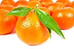Vele mandarijn Stock Foto's