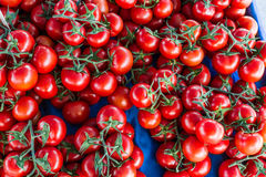 Vele middelgrote tomaten royalty-vrije stock fotografie