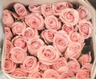 Vele Mooie Pastelkleur Roze Rozen tonen Zoete Liefde royalty-vrije stock afbeeldingen