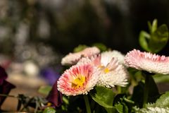 Vele multi-colored bloemen royalty-vrije stock foto's