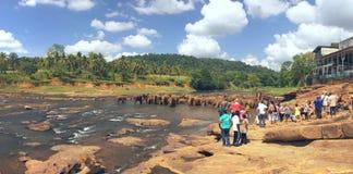 Vele olifanten die in de rivier baden Royalty-vrije Stock Foto's