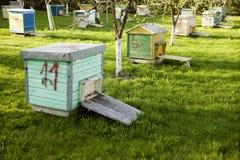 Vele oude bijenkorven die dichtbij bomen worden geplaatst Stock Afbeeldingen
