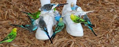 Vele parkieten op tennisschoenen royalty-vrije stock fotografie