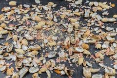 Vele pindashells worden verdeeld op een keuken worktop royalty-vrije stock afbeeldingen