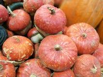 Vele pompoenen op een landbouwersmarkt royalty-vrije stock foto's