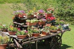vele potten van bloemen in de blokkenwagen Royalty-vrije Stock Foto