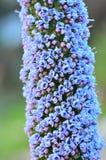 Vele purpere kleine bloemen Stock Foto's