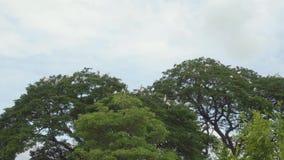 Vele reigers boven de boom stock videobeelden
