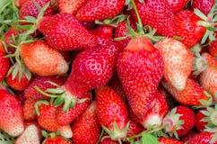 Vele rode aardbeien Groep eigengemaakte rijpe aardbeien Vegetarisch voedsel van organisch aardbeifruit Close-up van rood royalty-vrije stock foto