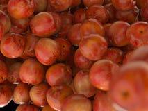 Vele Rode rijpe appelen Royalty-vrije Stock Foto