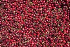 Vele rode rijpe kersen in een bak klaar om voor verkoop worden verpakt stock foto
