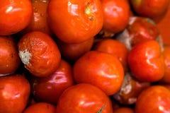 Vele rode tomaten zijn behandeld met vorm en verrotting royalty-vrije stock afbeeldingen