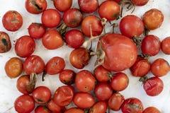Vele rotte die tomatenachtergrond, met vormclose-up wordt behandeld stock afbeelding