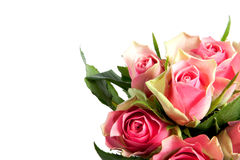 Vele roze romantische rozen Royalty-vrije Stock Afbeelding