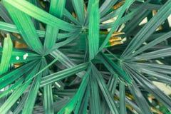 Vele samen Groen en gele bladeren royalty-vrije stock foto's