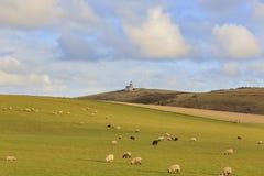 Vele sheeps op het landbouwbedrijf Stock Foto's