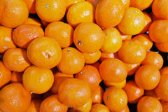 Vele sinaasappel Royalty-vrije Stock Afbeeldingen