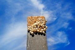 Vele slakken op de bovenkant van een zwart hout Stock Foto