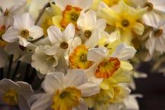 Vele soorten gele narcissen in een boeket, Gele, witte gele narcissen binnen Stock Afbeeldingen