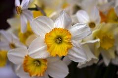 Vele soorten gele narcissen in een boeket, Gele, witte gele narcissen in de lente Stock Foto