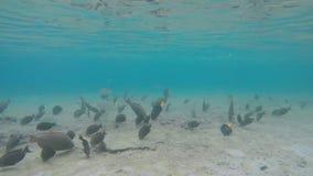 Vele species van tropische vissen zwemmen onder water stock videobeelden