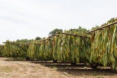 Vele Steigerwagens van Burley-Tabak royalty-vrije stock foto's