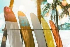 Vele surfplanken naast kokospalmen stock afbeelding