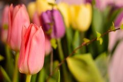 Vele tulpen die in een mooi park tot bloei komen Stock Afbeelding