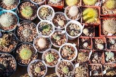 Vele verschillende cactussen in bloempotten mengen het verkopen in bloemenopslag, hoogste mening Tuincentrum met de installatiesv stock fotografie