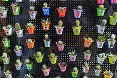 Vele verschillende cactussen in kleine potten Royalty-vrije Stock Afbeelding
