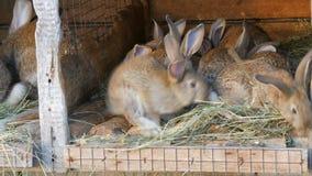 Vele verschillende konijnen in kooi op het huis bewerken stock video