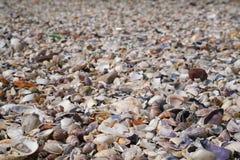 Vele verschillende lege overzeese shells in het Overzees van Marmara Stock Foto's