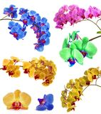 Vele verschillende orchideeën isoleren in één pagina Stock Foto's