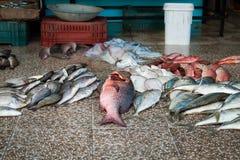 Vele verschillende vissen groot en klein op de vloer van de vissenmarkt stock afbeelding